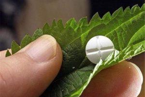 سه کارخانه تولید گیاه دارویی در قم فعال است