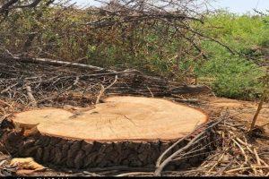 انتقاد از تخریب باغات قم؛ با قطع درختان بهشدت برخورد میشود