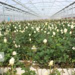 ۷۰ درصد تسهیلات اشتغال روستایی استان دربخش کشاورزی جذب شد