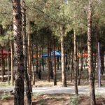بوستانهای شهر قم به صورت مستمر ضدعفونی میشود