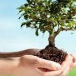 اجرای طرح رایگان درختکاری در قم