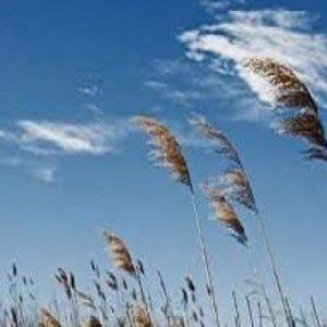 پیش بینی وزش باد نسبتا شدید در قم