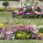 تولید بیش از ۱۶۴ هزار گلدان فصلی در منطقه دو