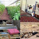 ۳۵۰ طرح اشتغال روستایی در قم در سال ۹۹ اجرایی میشود