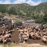 حضور بیش از 2 هزار عشایر در استان قم