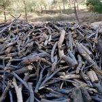 کشف و ضبط بیش از 25 تن چوب قاچاق در قم