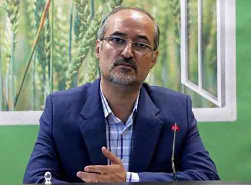 ۱۸۰ تن زیتون در قم برداشت شده است – پایگاه خبری شهرکریمه   اخبار ایران و جهان