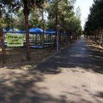 سخنگوی شورای شهر قم: مخالف قلعوقمع درختان بوستان فدک هستیم