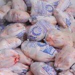 ۳۰ تن مرغ مازاد بر تولید برای تنظیم بازار در قم توزیع میشود
