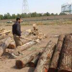 کشف 94 اصله درخت قاچاق در قم