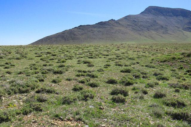 اهتمام جدی برای ایجاد پوشش گیاهی در ۹۰۰ هکتار از اراضی بیابانی قم – پایگاه خبری شهرکریمه | اخبار ایران و جهان
