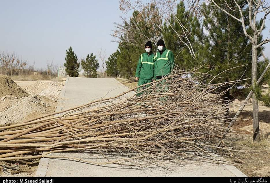 شهرکریمه – ۶۰۹۰ درخت مزین به نام شهیدان در بوستان یادمان قم کاشته میشود