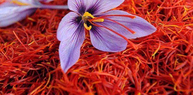 تاثیر ماده موثره زعفران در درمان اختلال حافظه شهرکریمه