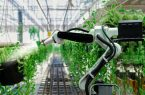 راه اندازی مزرعه ای که کاملا به دست ربات ها اداره می شود!|شهرکریمه